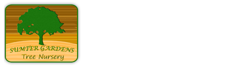 Sumter Gardens Nursery - Wholesale Nursery